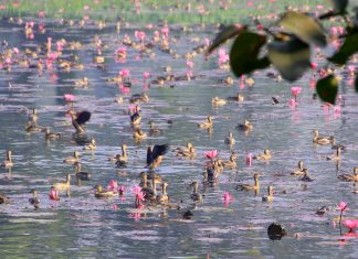 Migratory birds at Jahangirnagar University