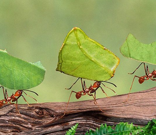 Ant Genocide
