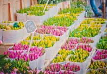 tulips on amsterdam market