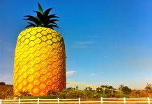The Big pineapple building