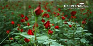 rose-village-sadullapur-dhaka-ticketshala-3