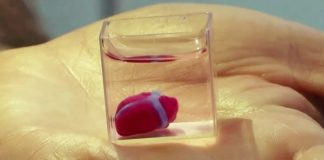 Heart-Using-Human-Cells